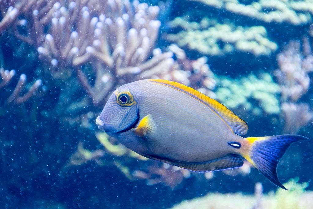 Aquarium Service Jamaica