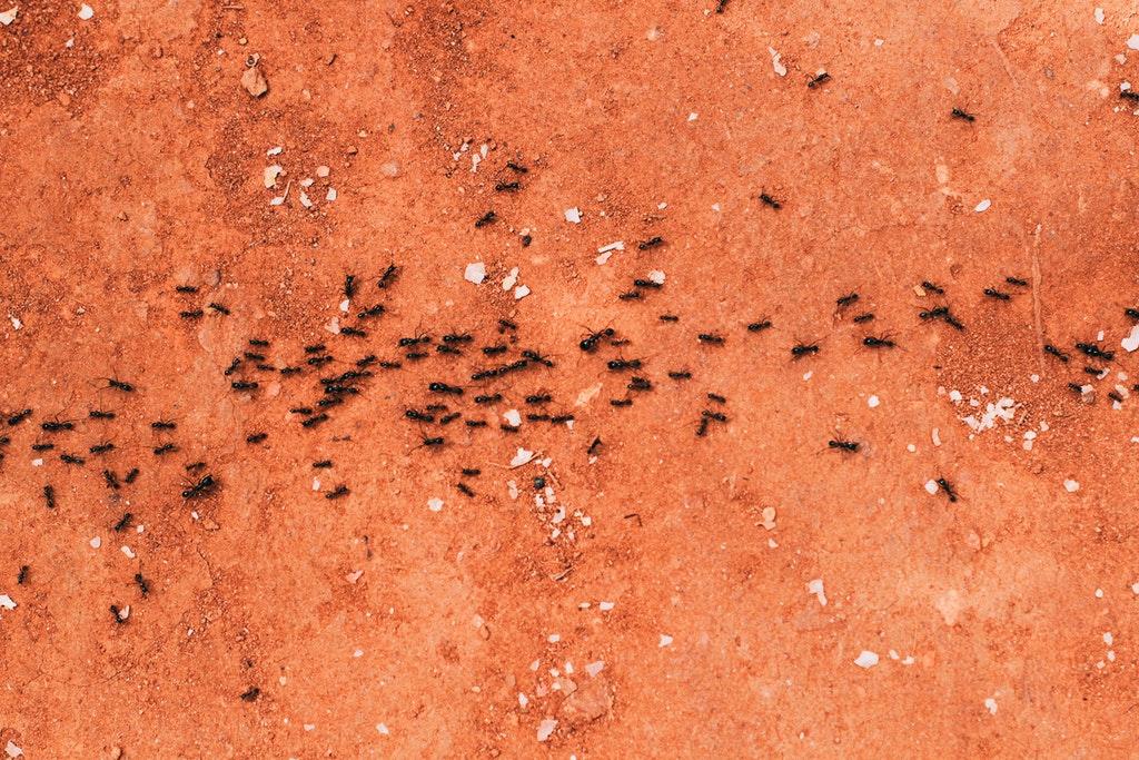 Termite Control Service Jamaica