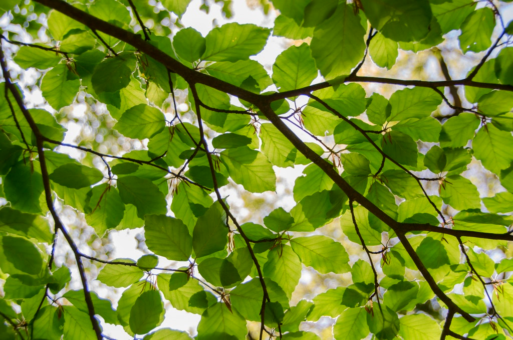 Arborist Jamaica
