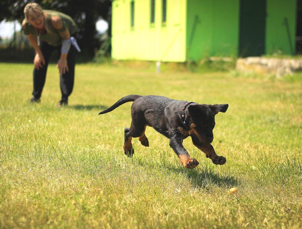 Dog Trainer Jamaica